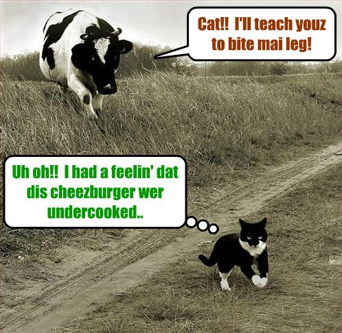 Snookers ran into a wee bit of trubble when he was searchin' for Millie an' teh unknowed kitteh..