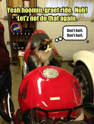Yeah hoomin, graet ride.  Noh!  Let'z not do that again.