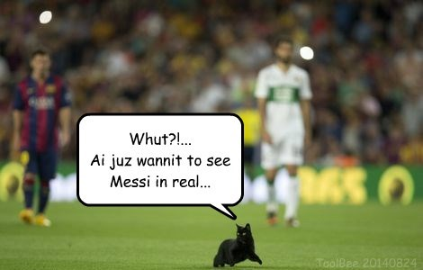 Kitteh On The Pitch In Barcelona (20140824)