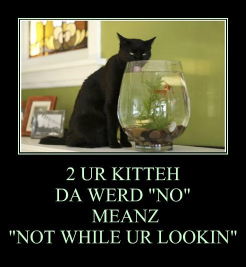 "2 UR KITTEH  DA WERD ""NO""  MEANZ ""NOT WHILE UR LOOKIN"""
