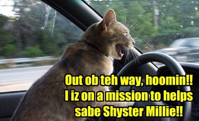 Kamper Moms an' Dads drive as quickly as dey can to Kamp Kuppykakes to join in teh search for Shyster Millie who habs gone missing..