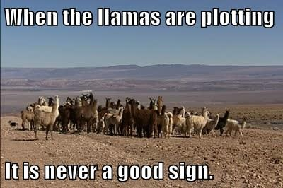 When the llamas are plotting  It is never a good sign.