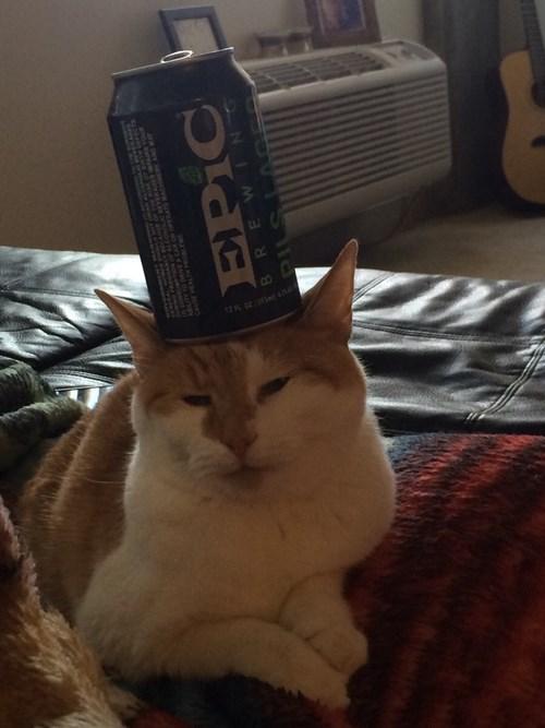 Everyone Wants a Cat Coaster