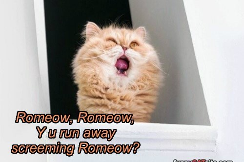 Romeow, Romeow, Y u run away screeming Romeow?