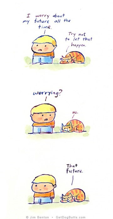 The Wisdom of Cats