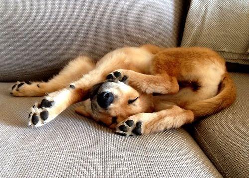 Puppy Pretzel