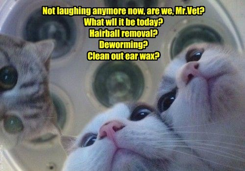 Not laughing anymore now, are we, Mr.Vet? What wll it be today? Hairball removal? Deworming? Clean out ear wax?