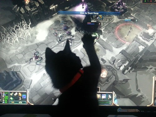 You Can Only Watch, Kitty!