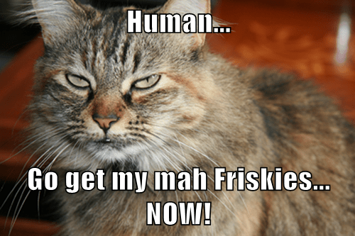 Human...  Go get my mah Friskies... NOW!