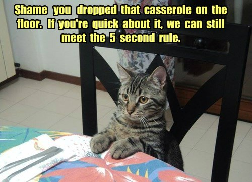 Shame   you   dropped  that  casserole  on  the  floor.   If  you're  quick  about  it,  we  can  still  meet  the  5  second  rule.