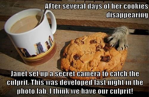 AFter several days of her cookies disappearing  Janet set up a secret camera to catch the culprit. This was developed last night in the photo lab. I think we have our culprit!
