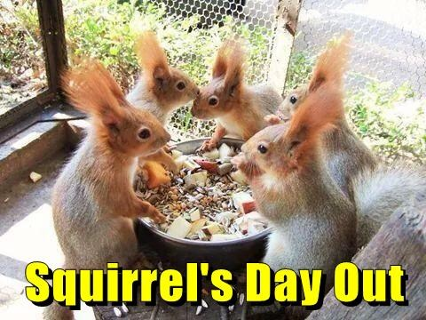 Squirrel's Day Out