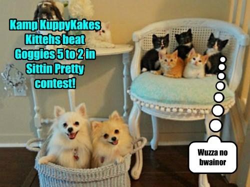 Kittehs beat Goggies in Contest