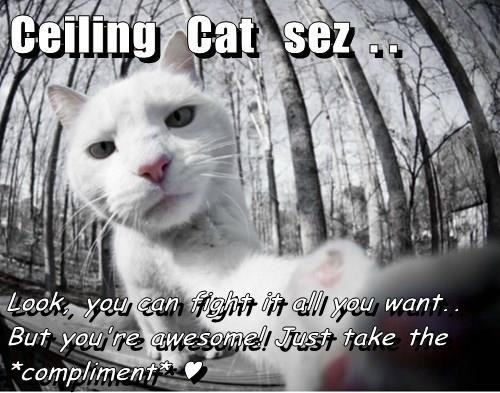Look, you can fight it all you want.. But you're awesome! Just take the *compliment* ♥