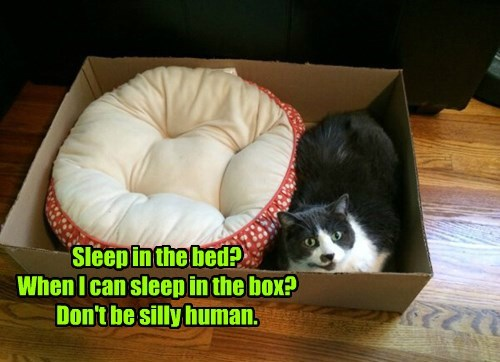 Sleep in the bed? When I can sleep in the box? Don't be silly human.
