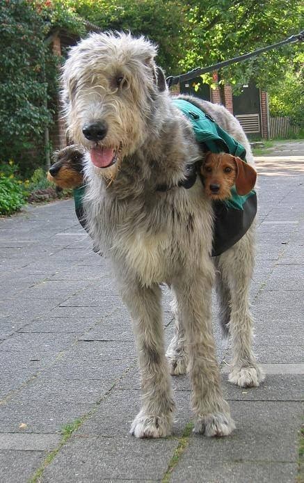 With two sub-woofers