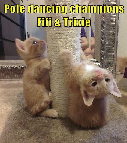 Pole dancing champions Fifi & Trixie