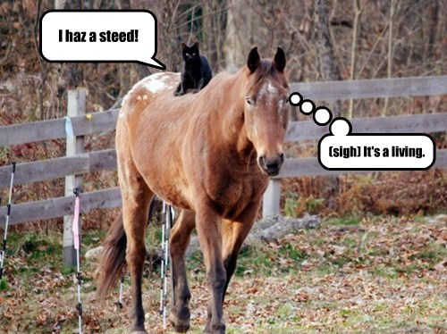 I haz a steed!