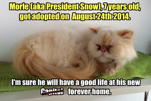 Morle (aka President Snow) Got Adopted