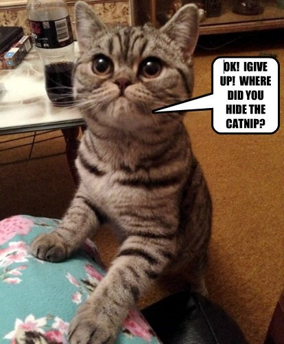OK!  IGIVE UP!  WHERE DID YOU HIDE THE CATNIP?