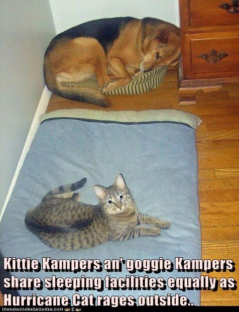 Kittie Kampers an' goggie Kampers share sleeping facilities equally as Hurricane Cat rages outside..
