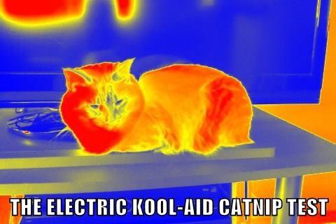 THE ELECTRIC KOOL-AID CATNIP TEST