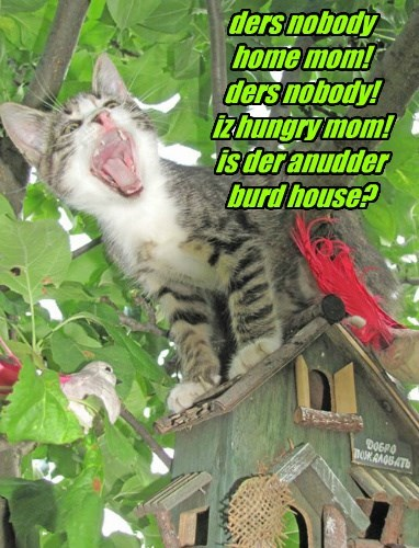 ders nobody home mom! ders nobody! iz hungry mom! is der anudder burd house?