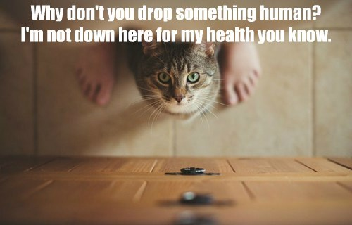 Why don't you drop something human? I'm not down here for my health you know.
