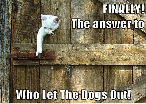 FINALLY!                                                        The answer to  Who Let The Dogs Out!