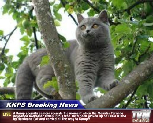 KKPS Breaking News - A Kamp security camera records the moment when the Monster Tornado deposited Godfather Kitteh into a tree. He'd been picked up on Feral Island by Hurricane Cat and carried all the way to Kamp!!