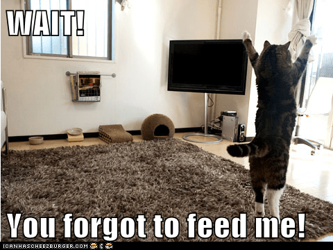 WAIT!  You forgot to feed me!