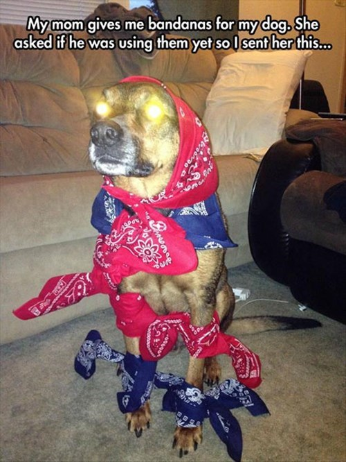 bandana,dogs,poorly dressed