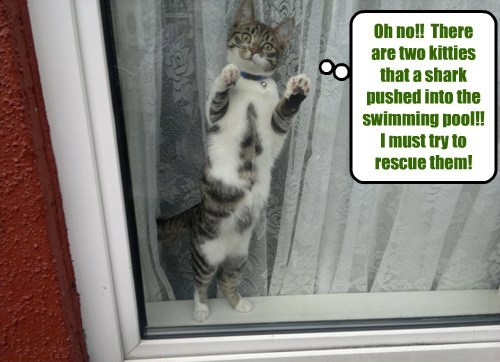 When looking outside of a Lounge window, Robin Banks gets the shock of his life!  A shark in the swimming pool!  And it shoved two kitties into the deep end!  Robin is determined to help those kitties!