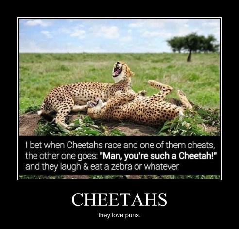 funny,puns,cheetah,wtf