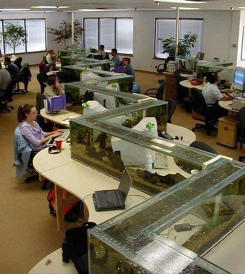 monday thru friday,aquarium,open office,g rated