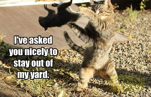 I've asked you nicely to stay out of my yard.