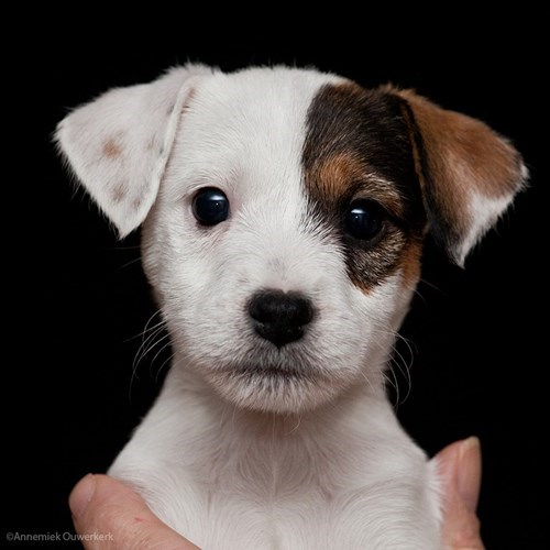 Puppy's First Head Shot!