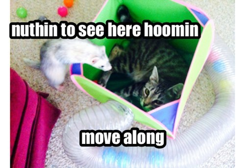 Hey Cat! That's Not Your Box!
