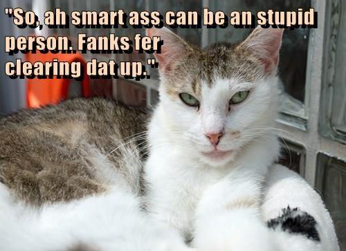 hoomins,Cats