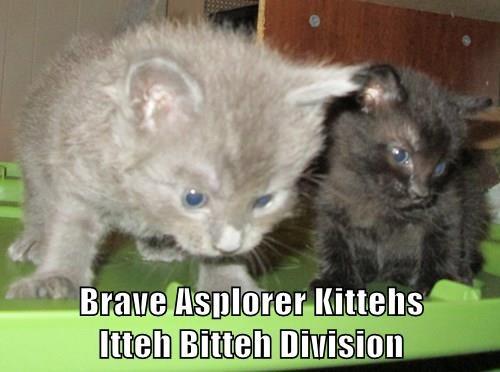 Brave Asplorer Kittehs                          Itteh Bitteh Division