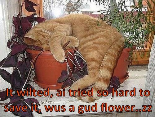 It wilted, ai tried so hard to save it, wus a gud flower..zz