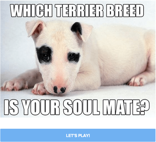 Find Your Terrier Soulmate By Taking This Quiz