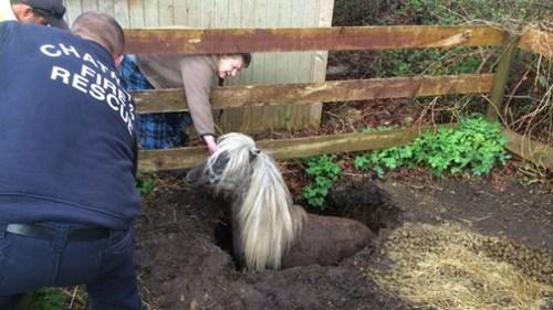 cute-10401,rescue-368,sinkhole-20,horse-1030