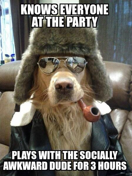 Good Guy Dog at a Party