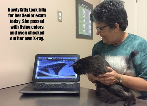 NawtyKitty took Lilly for her Senior exam today. She passed with flying colors and even checked out her own X-ray.