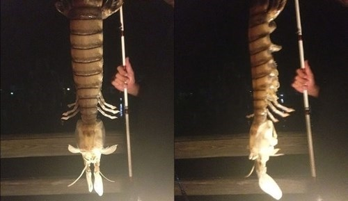 A Fishermen Dredged Up This Horrifically Huge Shrimp From the Depths. Take Cover.
