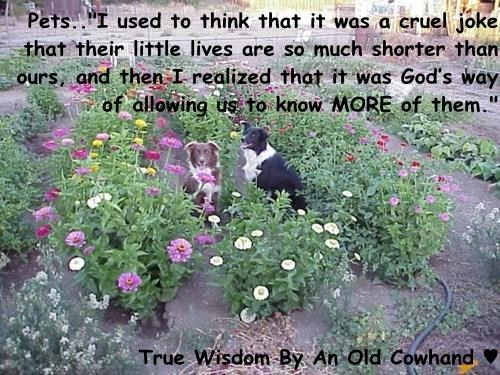 "Pets..""I used to think that it was a cruel joke that their little lives are so much shorter than ours, and then I realized that it was God's way of allowing us to know MORE of them.""  True Wisdom By An Old Cowhand ♥"