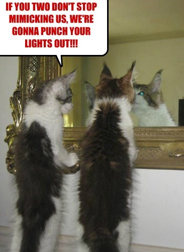 IF YOU TWO DON'T STOP MIMICKING US, WE'RE GONNA PUNCH YOUR LIGHTS OUT!!!