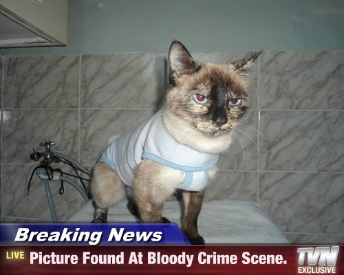 Breaking News - Picture Found At Bloody Crime Scene.