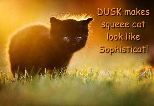 DUSK makes squeee cat look like Sophisticat!